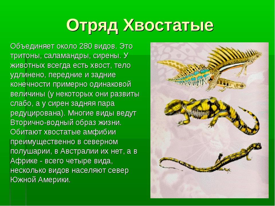 Отряд Хвостатые Объединяет около 280 видов. Это тритоны, саламандры, сирены....