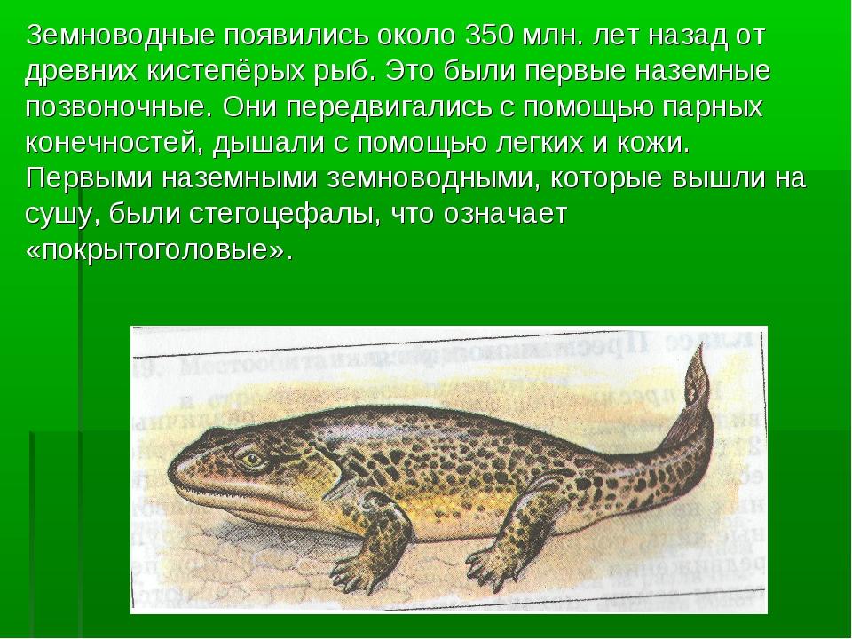 Земноводные появились около 350 млн. лет назад от древних кистепёрых рыб. Это...