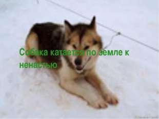 Собака катается по земле к ненастью