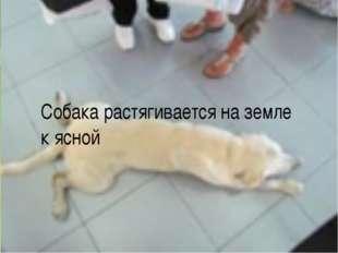 Собака растягивается на земле к ясной