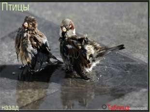Птицы назад Таблица