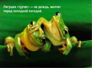 Лягушки «турчат» — на дождь, молчат перед холодной погодой.