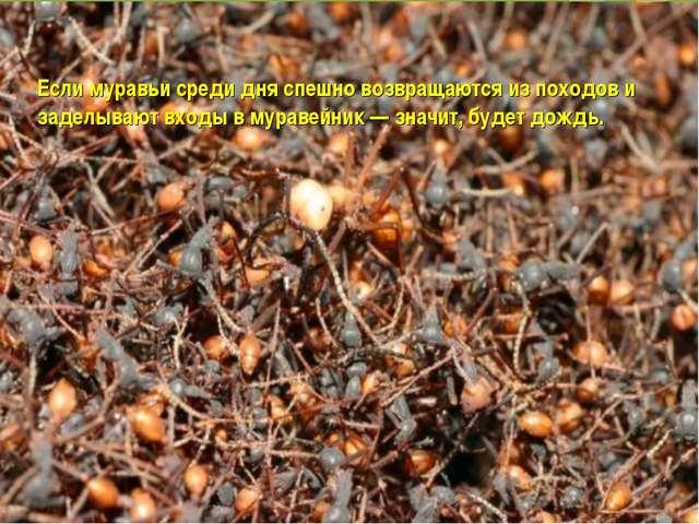 Если муравьи среди дня спешно возвращаются из походов и заделывают входы в му...