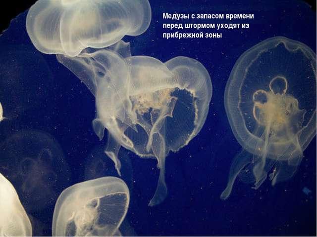 Медузы с запасом времени перед штормом уходят из прибрежной зоны