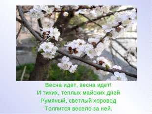 Весна идет, весна идет! И тихих, теплых майских дней Румяный, светлый хорово