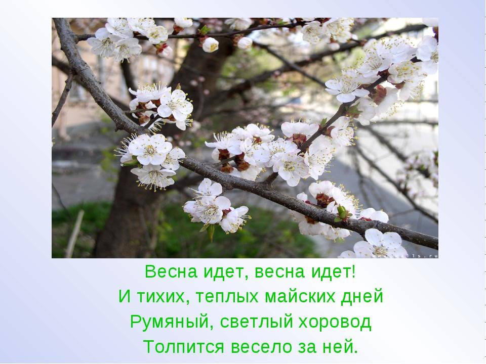 Весна идет, весна идет! И тихих, теплых майских дней Румяный, светлый хорово...