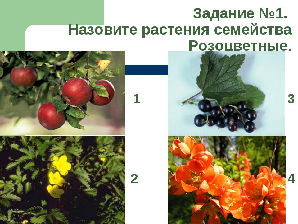 Задание №1. Назовите растения семейства Розоцветные. 1 2 3 4