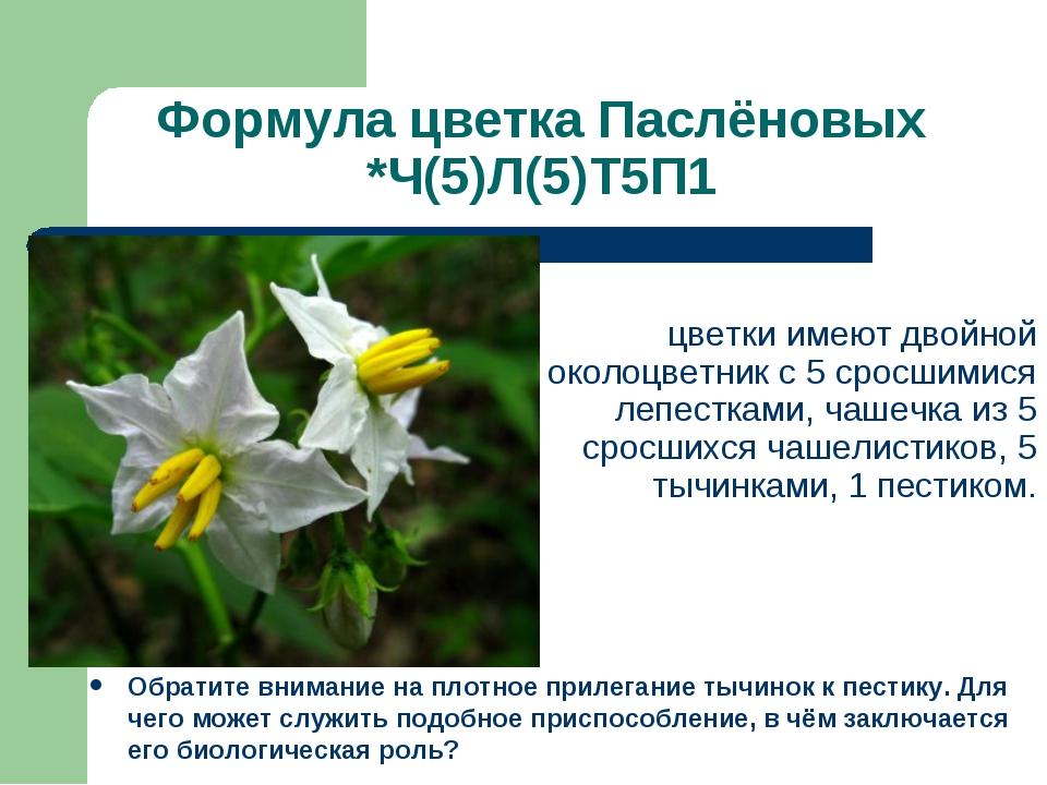Формула цветка Паслёновых *Ч(5)Л(5)Т5П1 Обратите внимание на плотное прилеган...