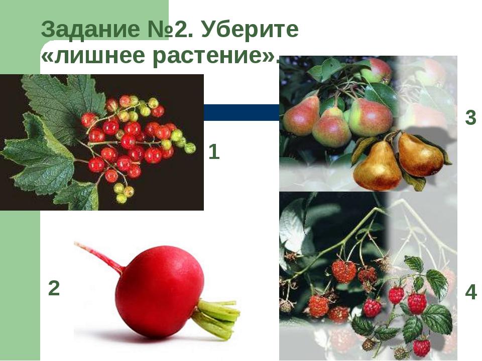 Задание №2. Уберите «лишнее растение». 1 2 3 4