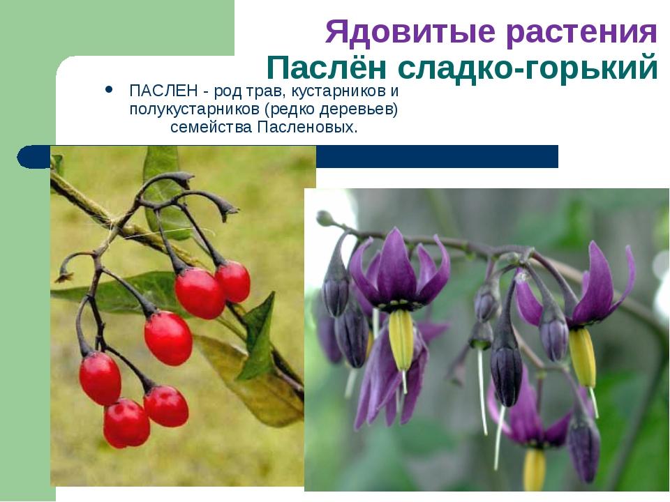 Ядовитые растения Паслён сладко-горький ПАСЛЕН - род трав, кустарников и полу...