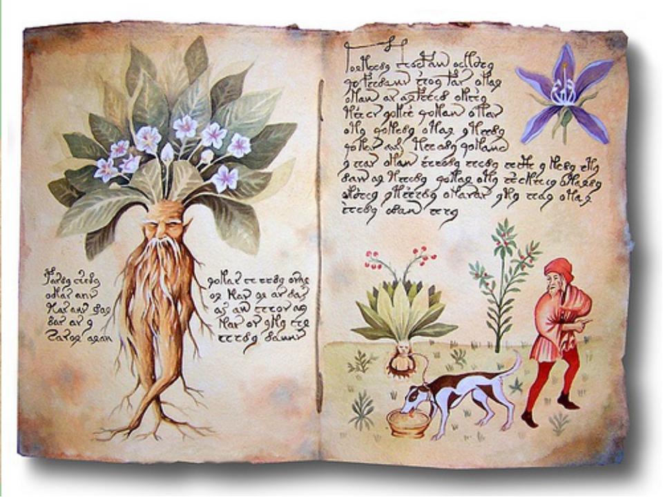Осторожно: МАНДРАГОРА!!! Растение часто упоминается в колдовских рецептахСре...