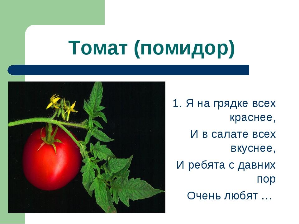 Томат (помидор)  1. Я на грядке всех краснее, И в салате всех вкуснее, И реб...