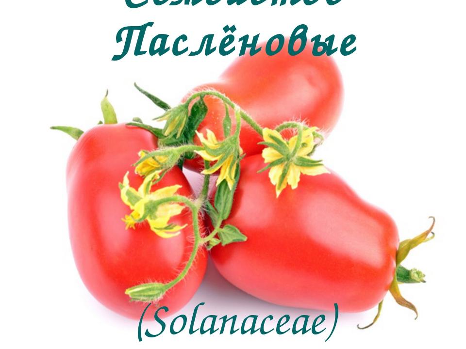 Семейство Паслёновые (Solanaceae)