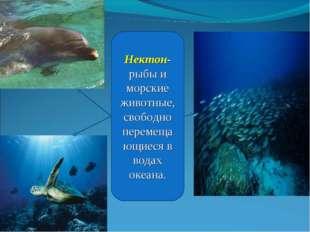 Нектон- рыбы и морские животные, свободно перемещающиеся в водах океана. Ермо