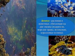 Бентос- растения и животные, обитающие на дне океана (водоросли, морские трав