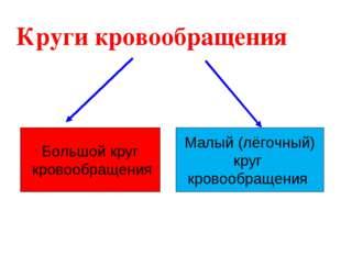 Круги кровообращения Большой круг кровообращения Малый (лёгочный) круг кровоо