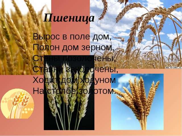 Пшеница Вырос в поле дом, Полон дом зерном, Стены позолочены, Ставни закол...