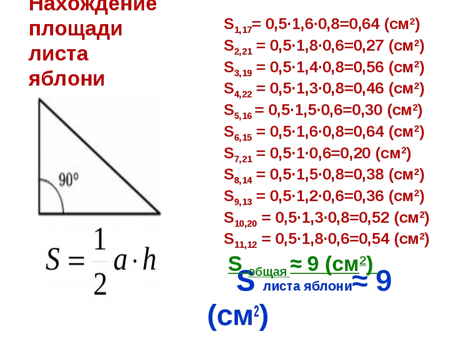 Нахождение площади листа яблони S листа яблони≈ 9 (см2) .. S1,17= 0,5∙1,6∙0,8...