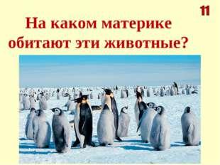 На каком материке обитают эти животные?