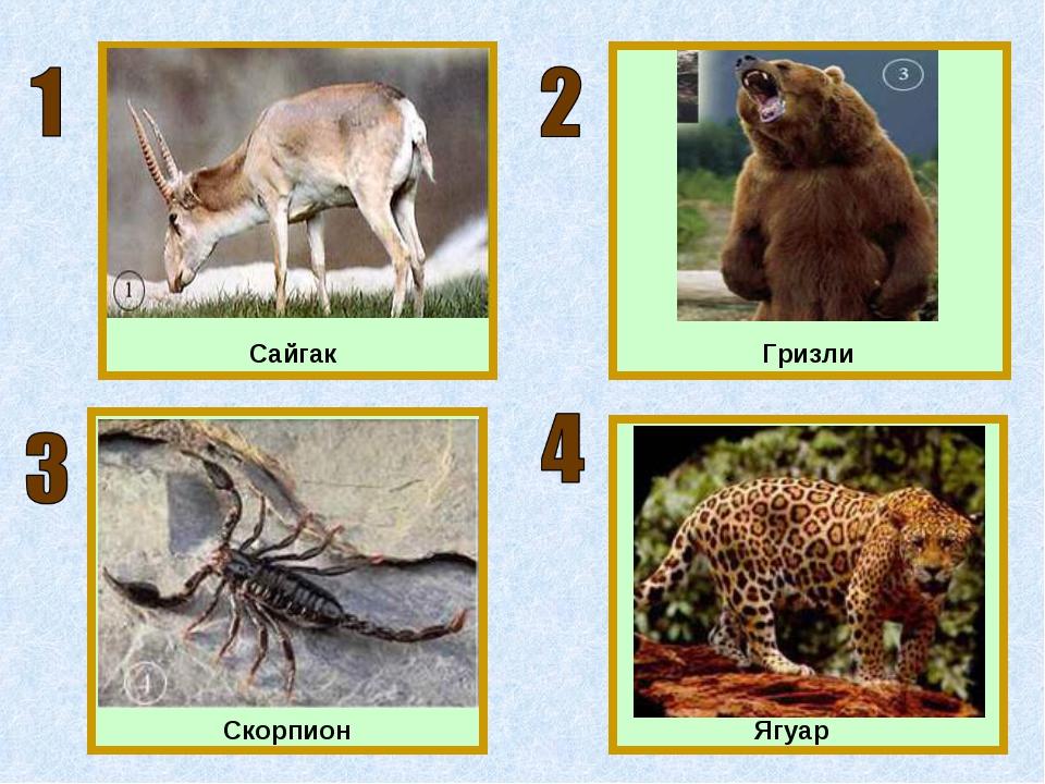 Сайгак Гризли Ягуар Скорпион
