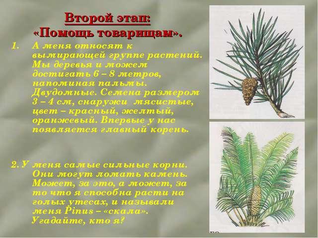 Второй этап: «Помощь товарищам». А меня относят к вымирающей группе растений....