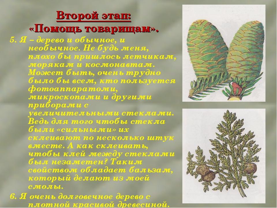 Второй этап: «Помощь товарищам». 5. Я – дерево и обычное, и необычное. Не буд...