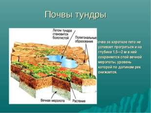 Почвы тундры Почва за короткое лето не успевает прогреться и на глубине 1,5—2