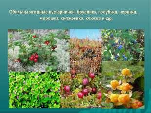 Обильны ягодные кустарнички: брусника, голубика, черника, морошка, княженика,