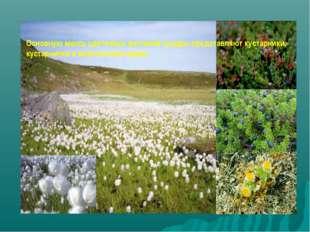 Основную массу цветковых растений тундры представляют кустарники, кустарнички