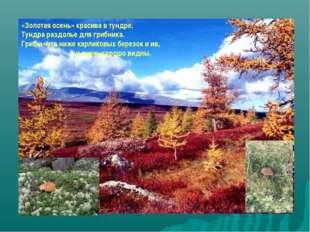 «Золотая осень» красива в тундре. Тундра раздолье для грибника. Грибы чуть ни