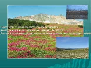Поверхность тундры представляет собой бескрайнюю равнину с многочисленными ре