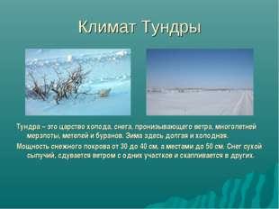 Климат Тундры Тундра – это царство холода, снега, пронизывающего ветра, много