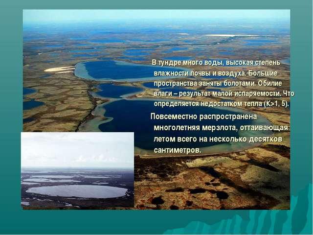 В тундре много воды, высокая степень влажности почвы и воздуха. Большие прос...