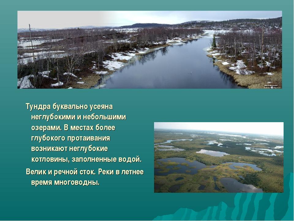 Тундра буквально усеяна неглубокими и небольшими озерами. В местах более глу...