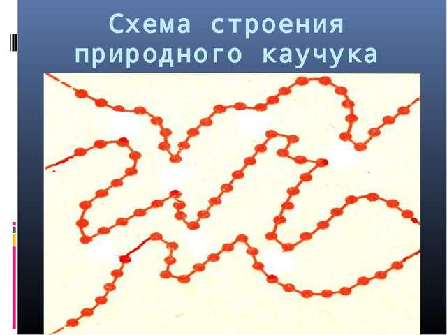 Схема строения природного каучука