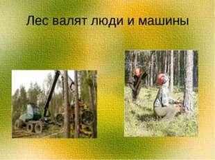 Лес валят люди и машины