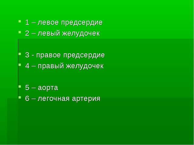 1 – левое предсердие 2 – левый желудочек 3 - правое предсердие 4 – правый жел...