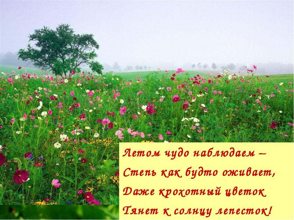 Летом чудо наблюдаем – Степь как будто оживает, Даже крохотный цветок Тянет к...