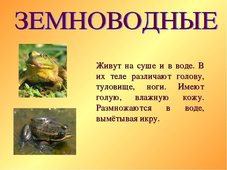 Живут на суше и в воде. В их теле различают голову, туловище, ноги. Имеют гол...
