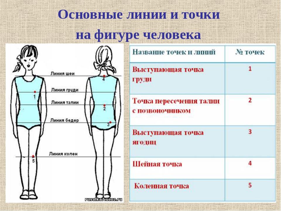 Основные линии и точки на фигуре человека