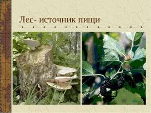 Лес- источник пищи