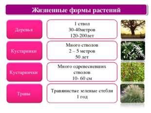 Царство растений Жизненные формы растений 1 ствол 30-40метров 120-200лет Мног