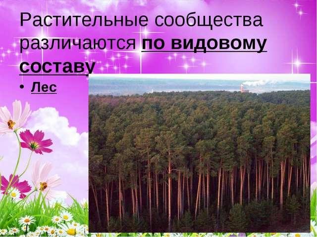 Растительные сообщества различаются по видовому составу Лес