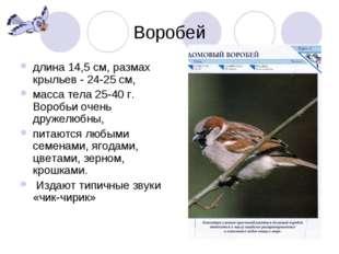 Воробей длина 14,5 см, размах крыльев - 24-25 см, масса тела 25-40 г. Воробьи