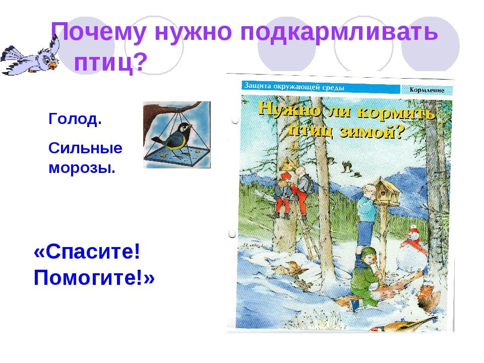 Почему нужно подкармливать птиц? «Спасите! Помогите!» Голод. Сильные морозы.