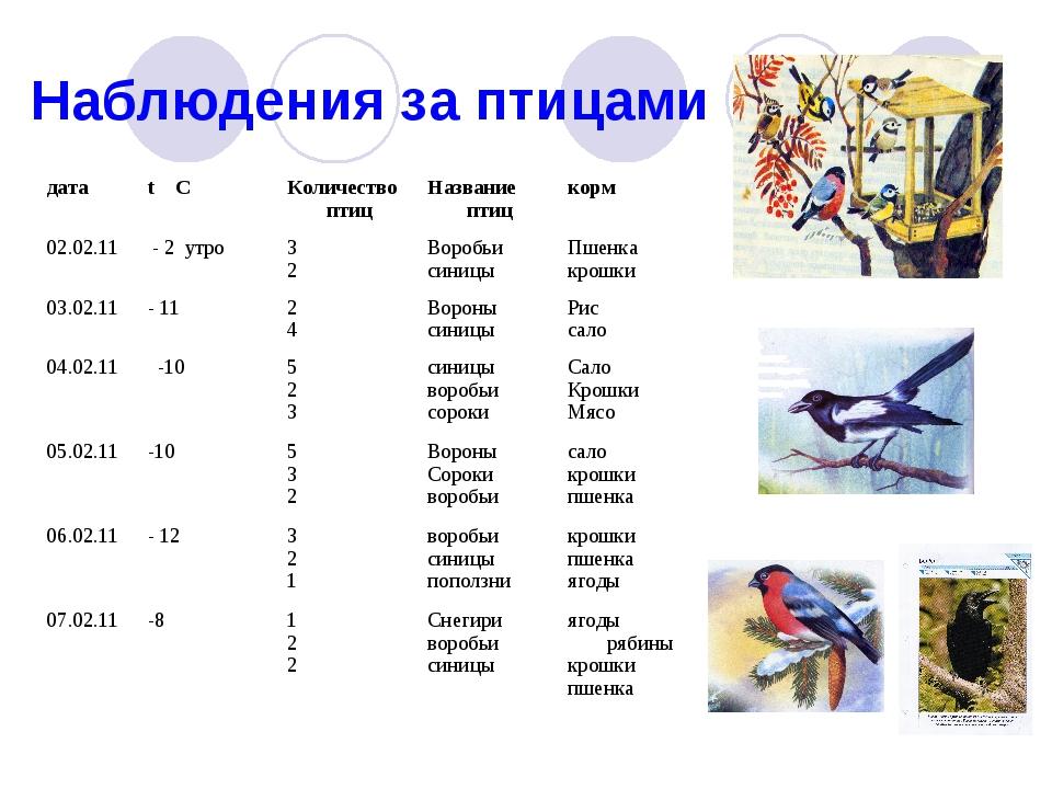 Наблюдения за птицами датаt CКоличество птицНазвание птицкорм 02.02.11 -...