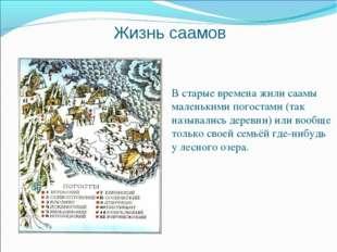 Жизнь саамов В старые времена жили саамы маленькими погостами (так назывались