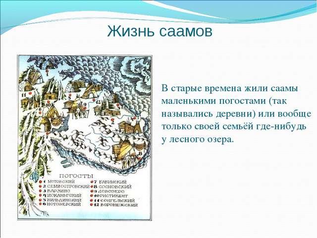 Жизнь саамов В старые времена жили саамы маленькими погостами (так назывались...