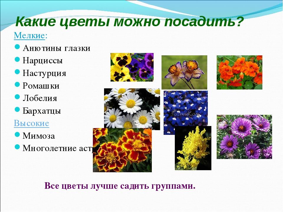 Какие цветы можно посадить? Мелкие: Анютины глазки Нарциссы Настурция Ромашки...
