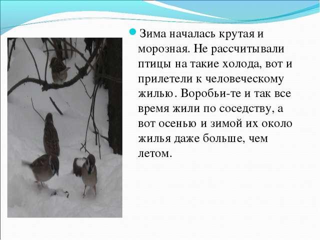 Зима началась крутая и морозная. Не рассчитывали птицы на такие холода, вот и...